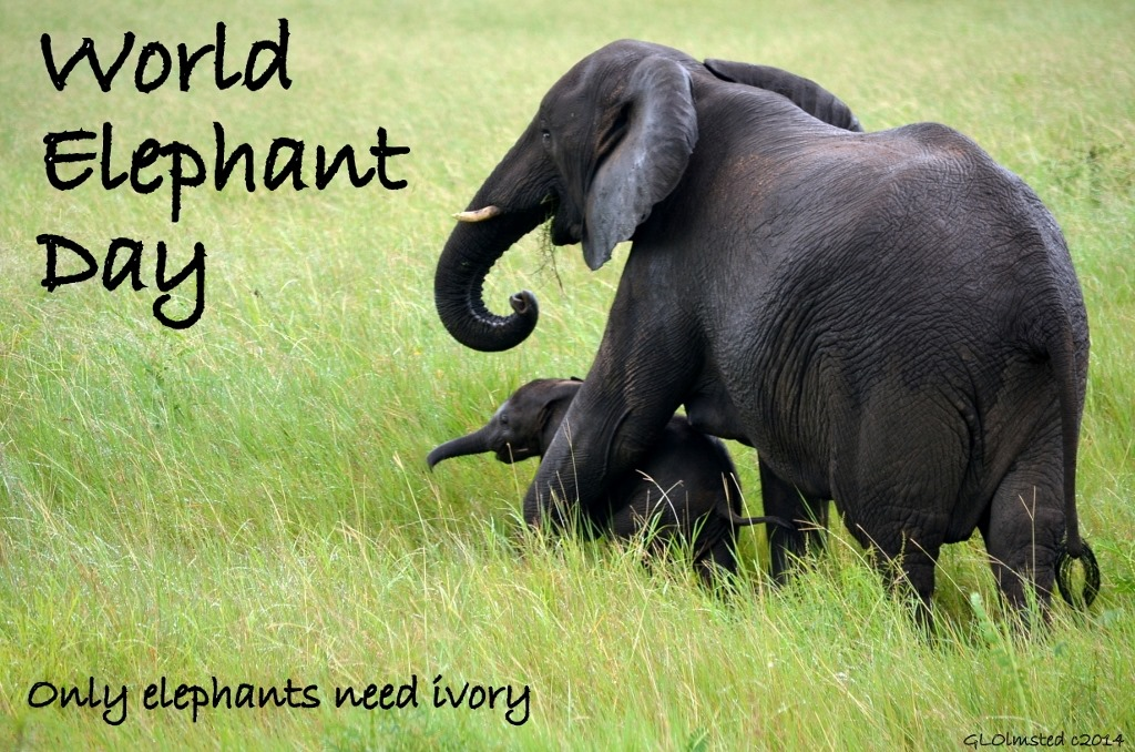 Image result for gifs for world elephant day 12 august 18